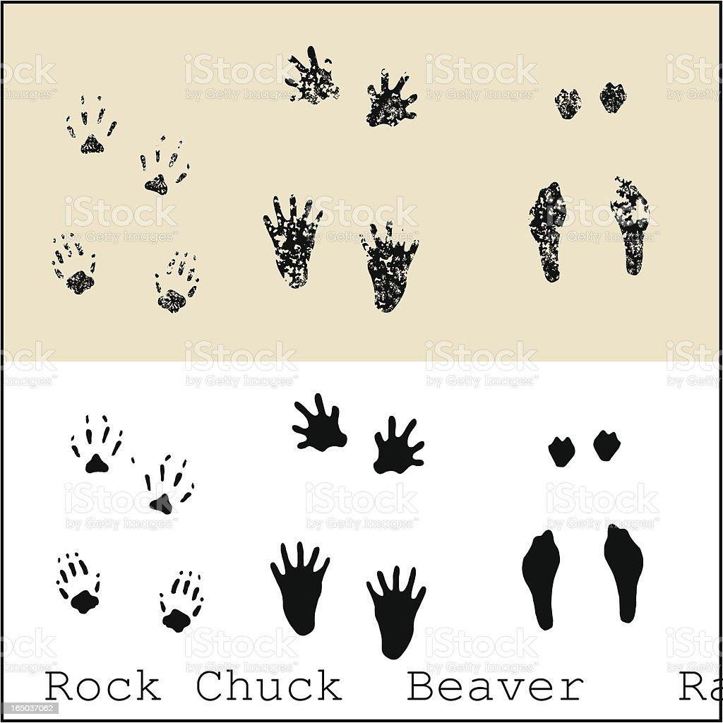 Rock Chuck - Beaver - Rabbit vector art illustration
