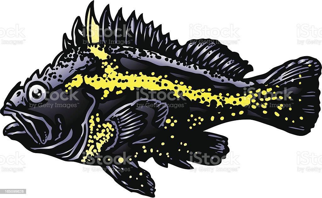 Rockfish royalty-free stock vector art
