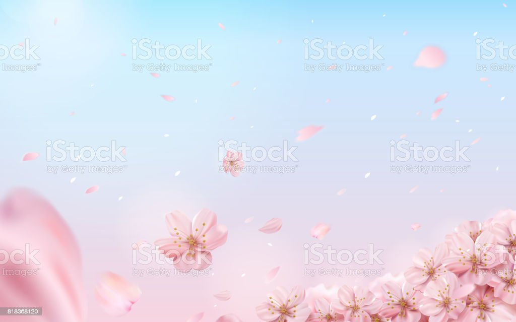 Romantic cherry blossom background vector art illustration
