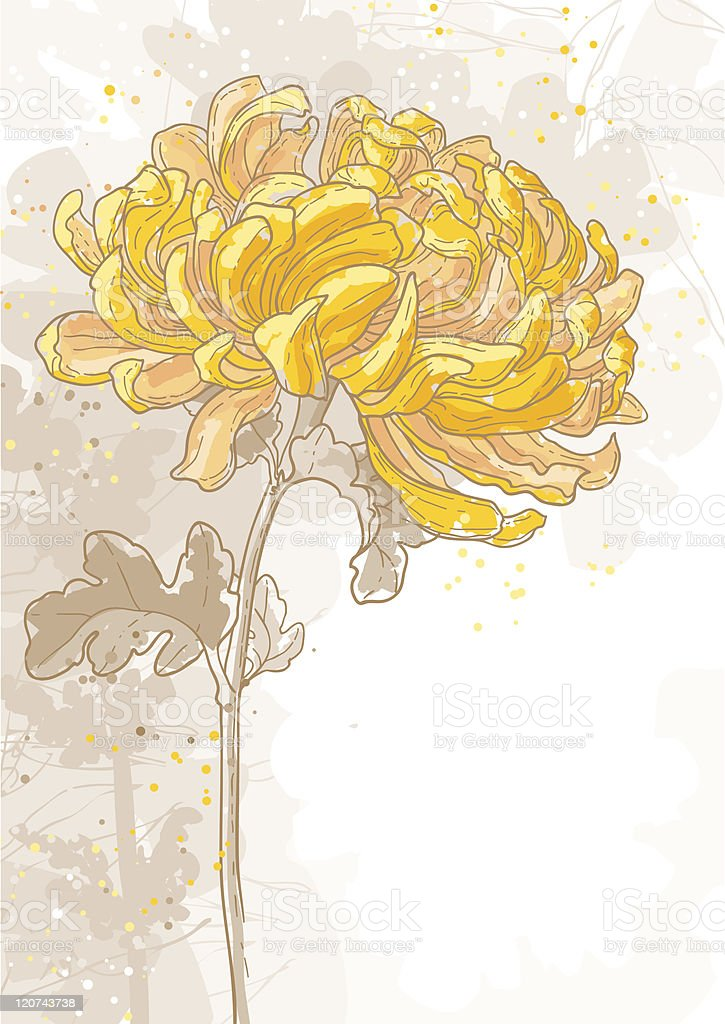 Romantic vector background with chrysanthemum royalty-free stock vector art