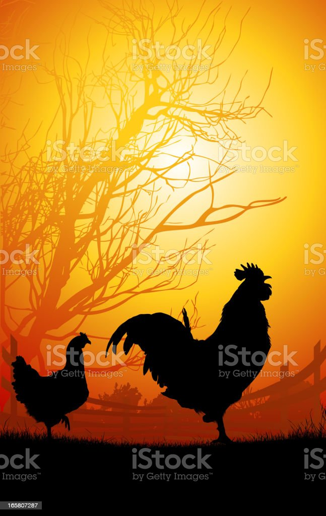 Rooster and Chicken in the morning vector art illustration