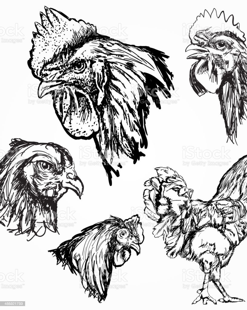Rooster and Chicken Sketches vector art illustration