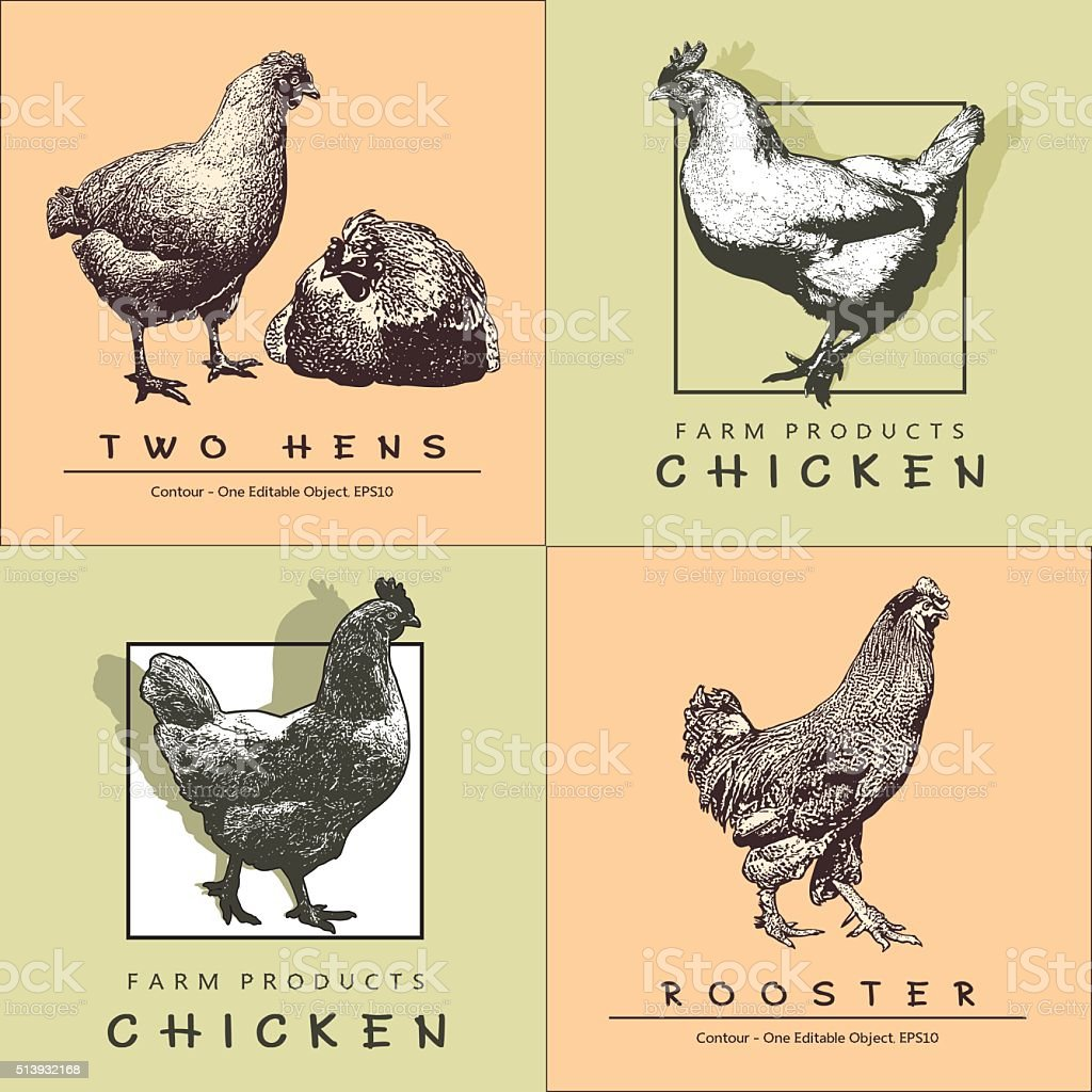 Rooster, Cockerel,  Chicken, Hen in Engraved Style. vector art illustration