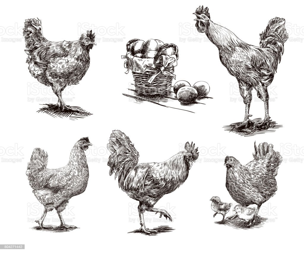 roosters, hens and chickens vector art illustration
