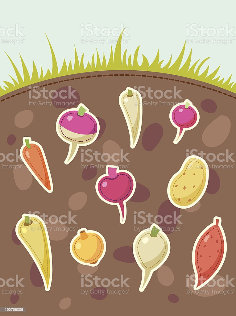Root vegetables grows under the ground royalty-free stock vector art