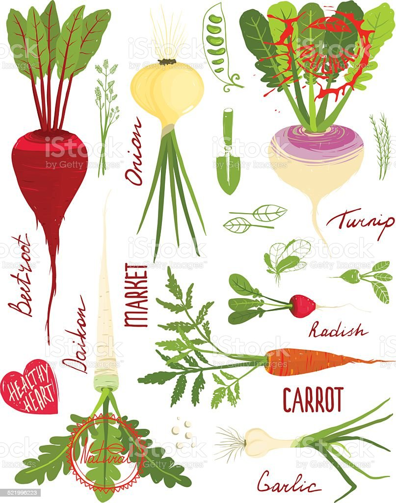 Root Vegetables with Greens Signs and Symbols Design Collection vector art illustration