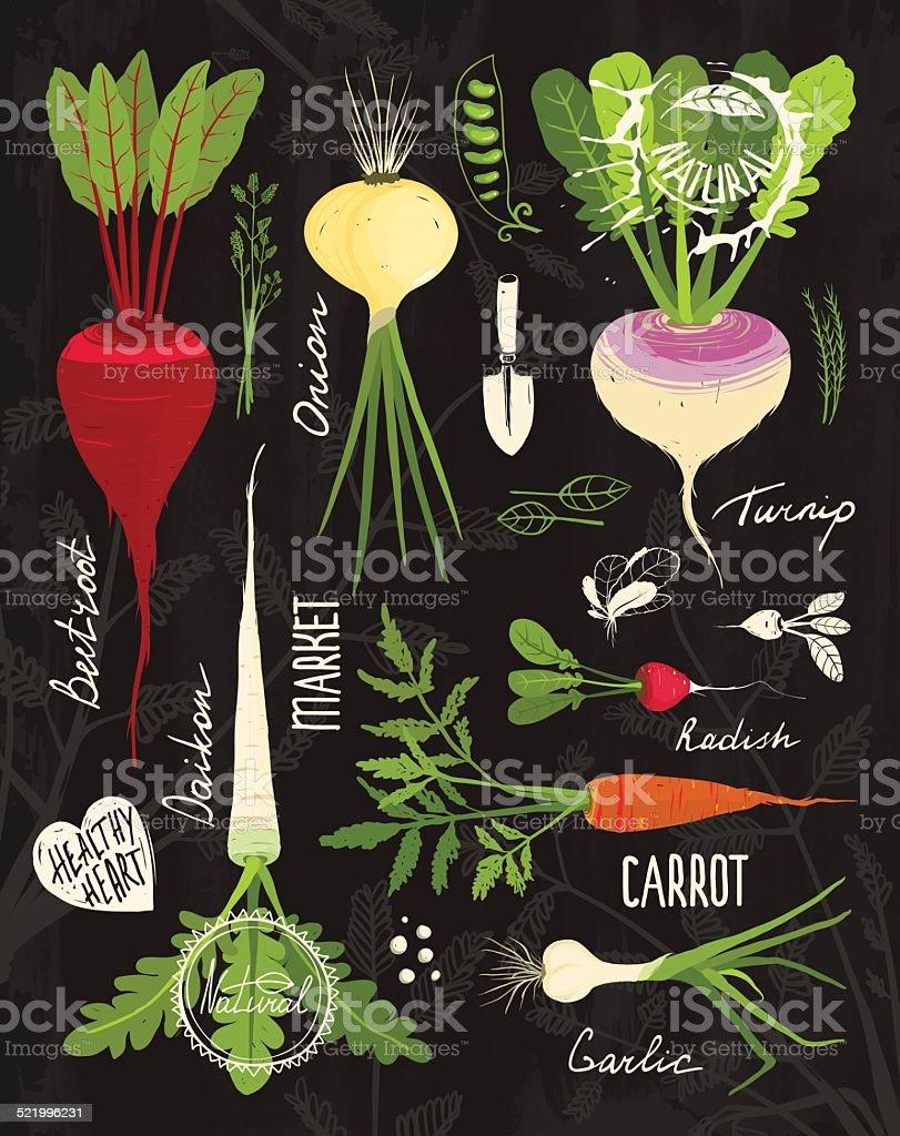 Root Vegetables with Leafy Tops Set for Design on Blackboard vector art illustration