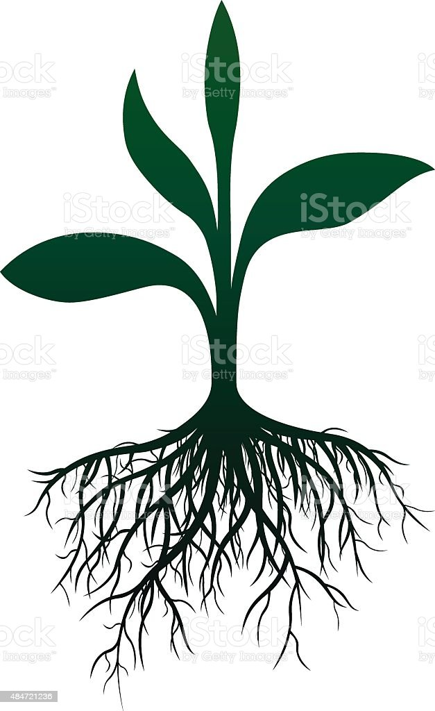 Roots vector art illustration