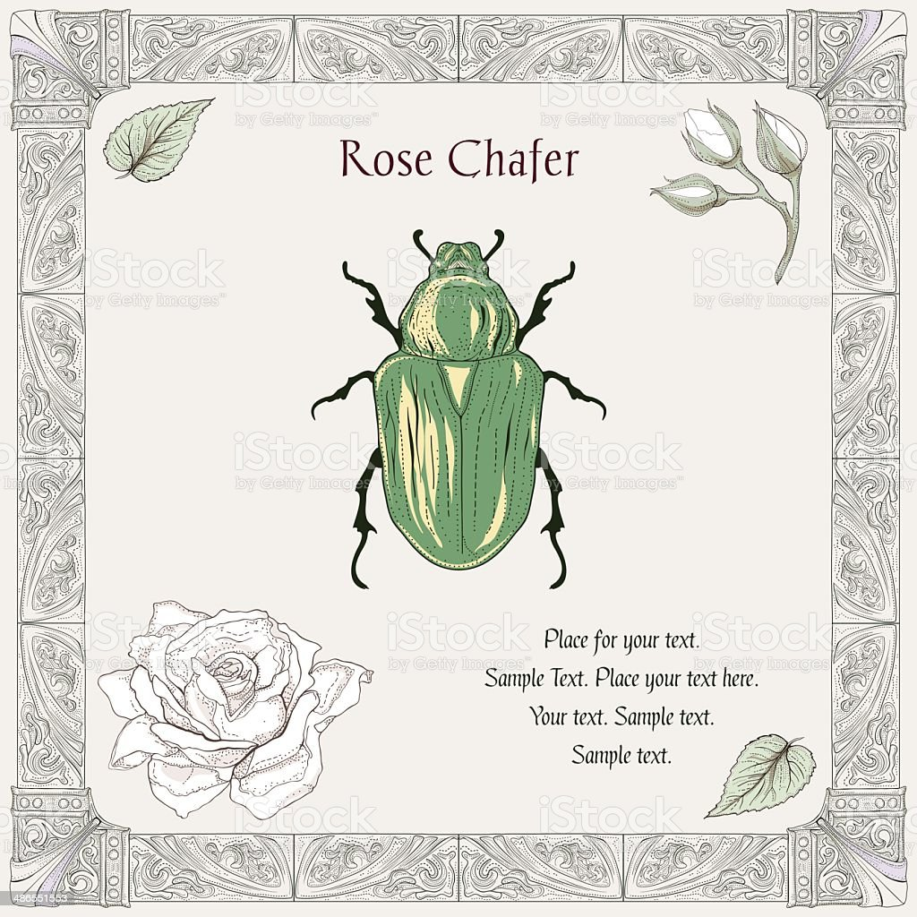 rose beetle drawing royalty-free stock vector art
