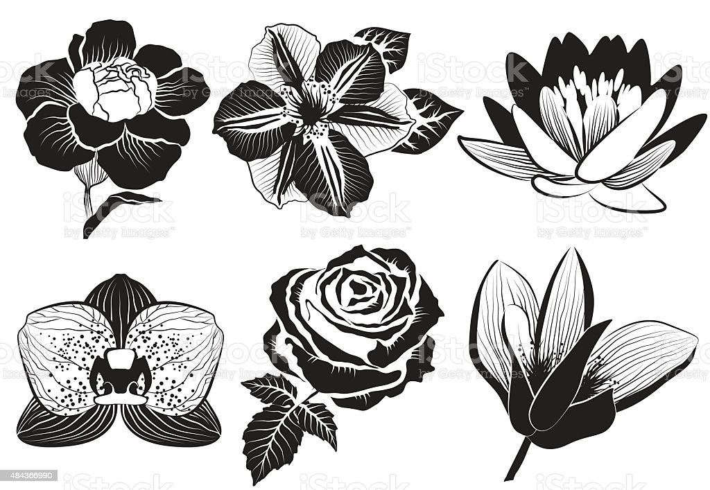 rose, clematis, orchid, water-lily, lotus, carnation and magnolia vector art illustration