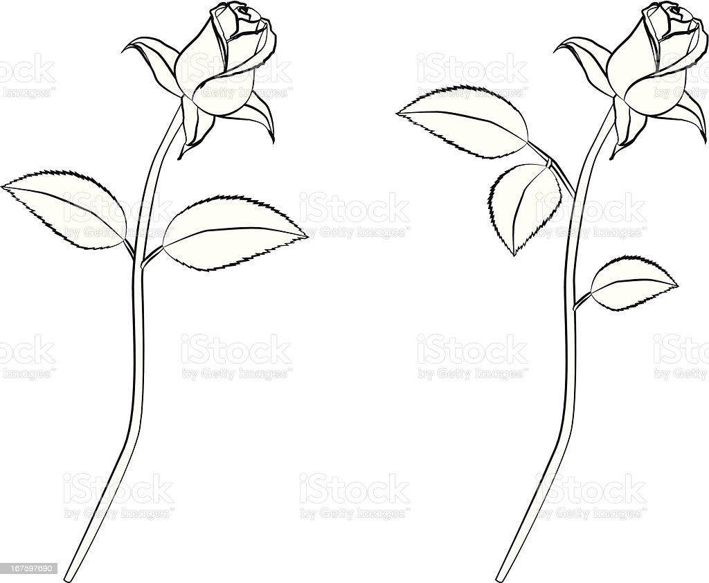 Rose lineart royalty-free stock vector art