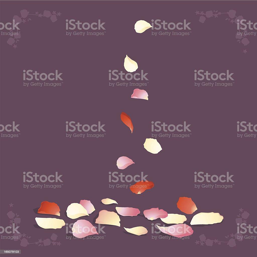 rose petals royalty-free stock vector art