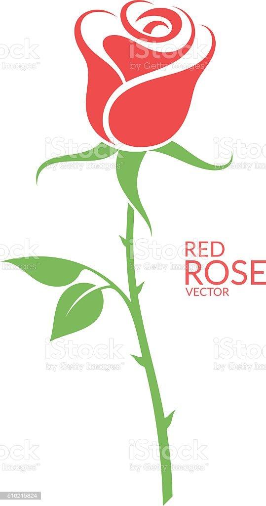 Rose. Red flower on white background vector art illustration
