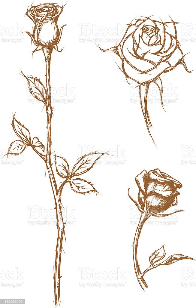 Rose Sketch vector art illustration