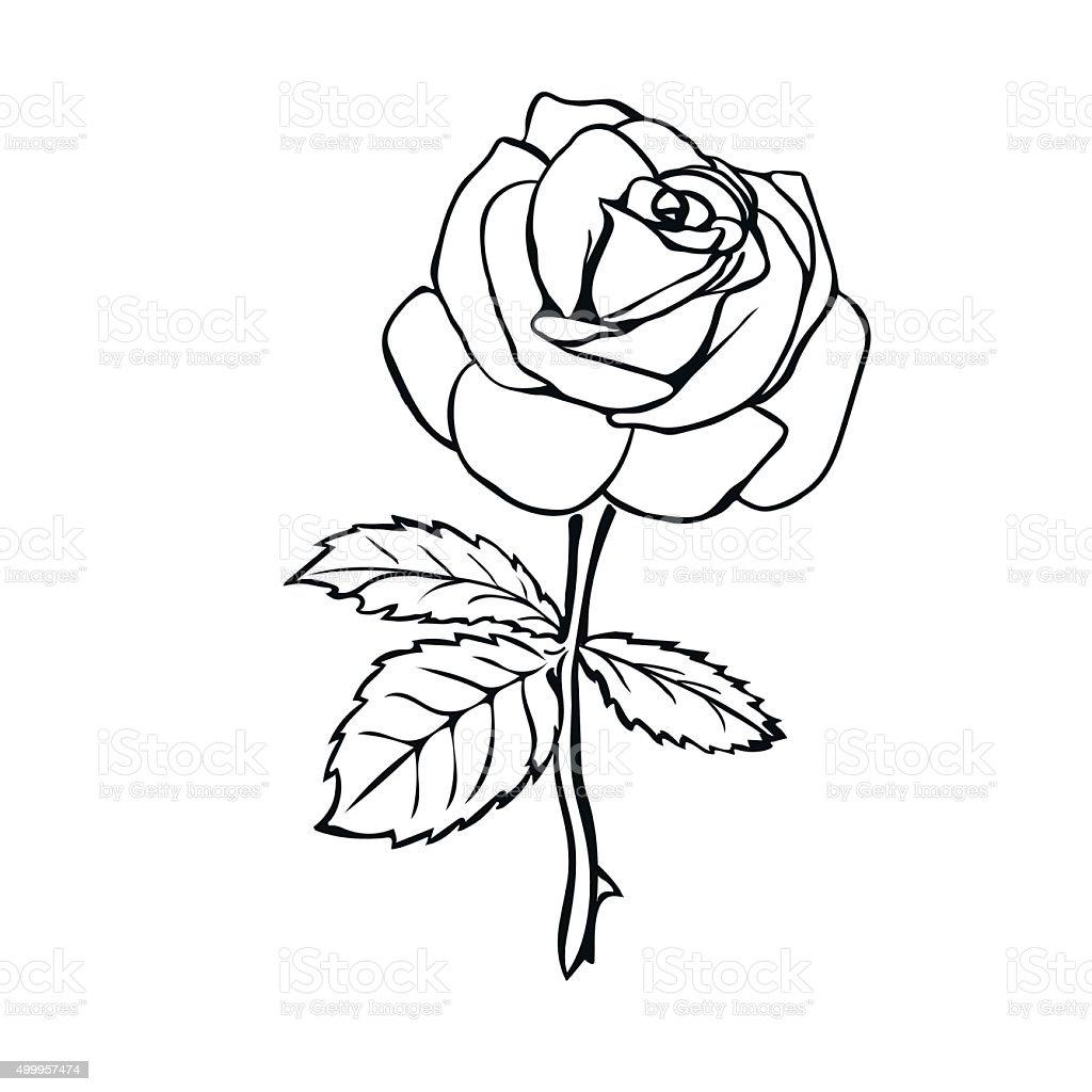Rose sketch. vector art illustration