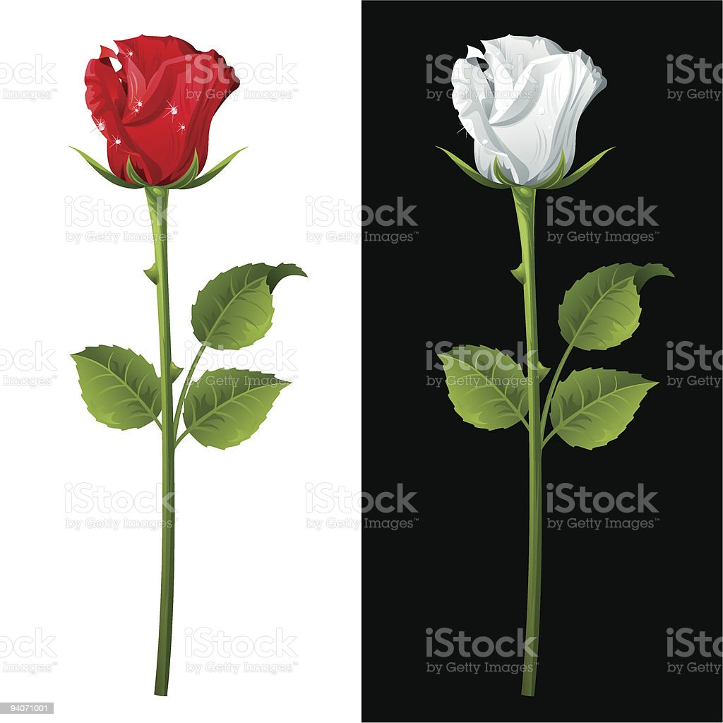 Rose vector art illustration