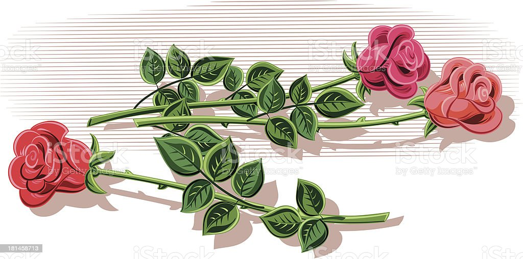 rosebuds royalty-free stock vector art