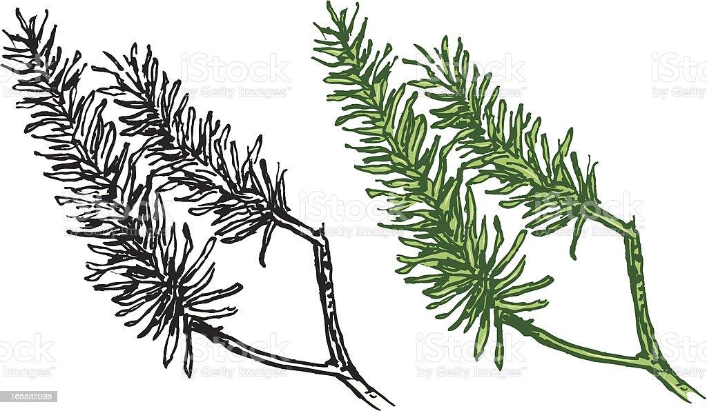 Rosemary - Spice royalty-free stock vector art