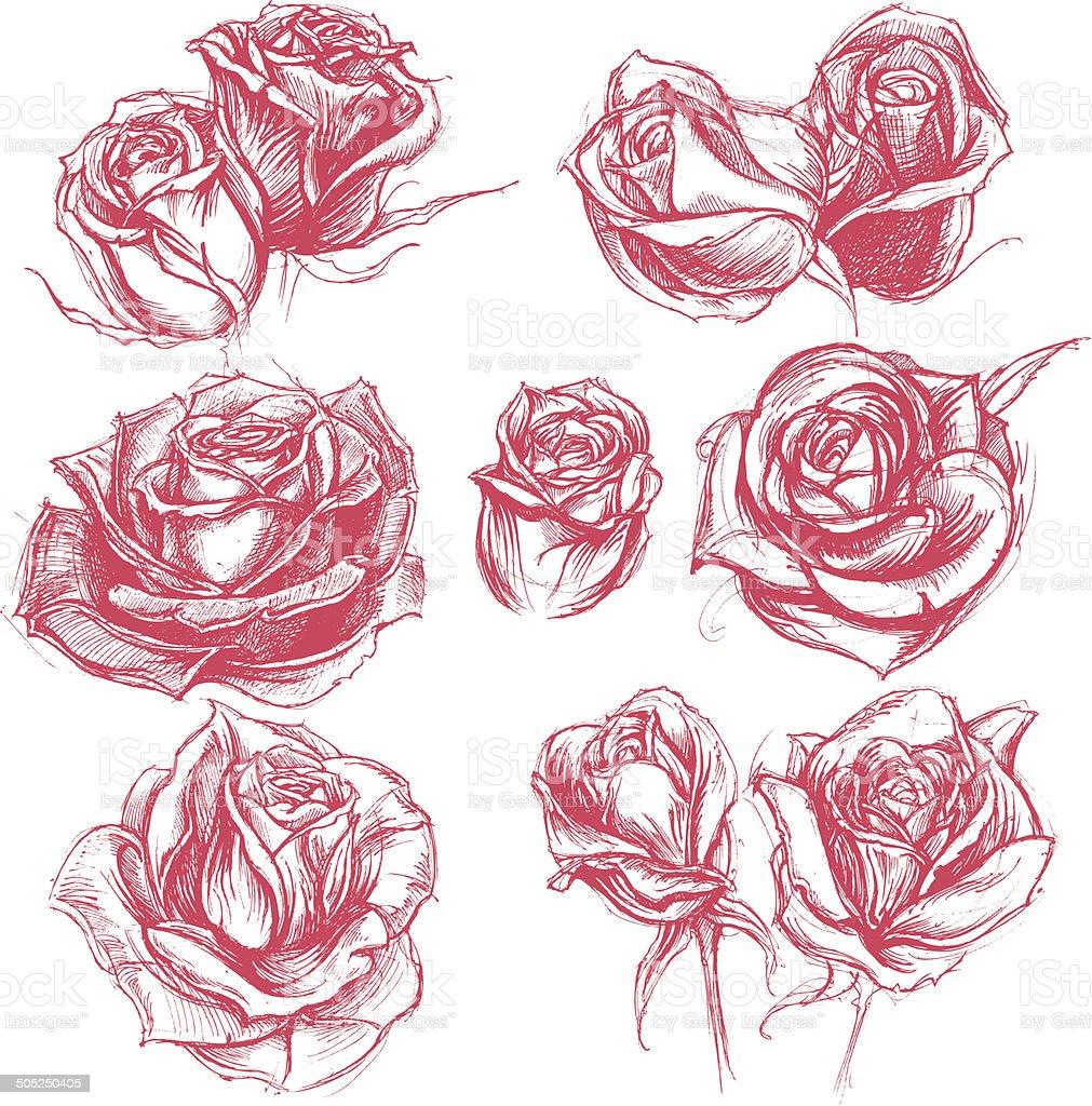 Roses Drawing set 001 royalty-free stock vector art