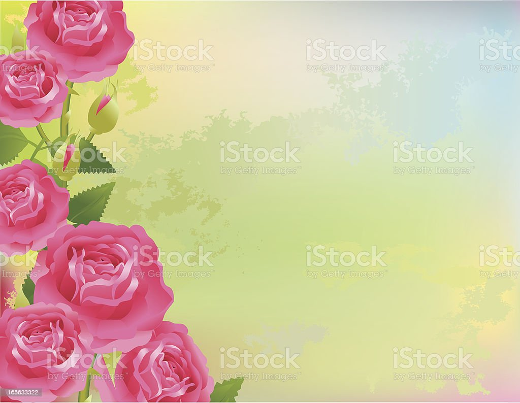 Roses on abstract background royalty-free stock vector art