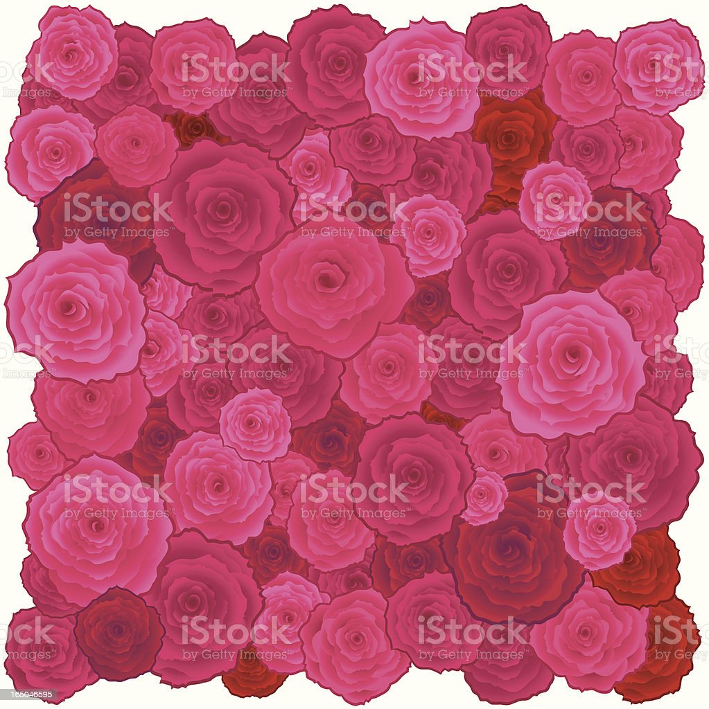 Roses Square royalty-free stock vector art