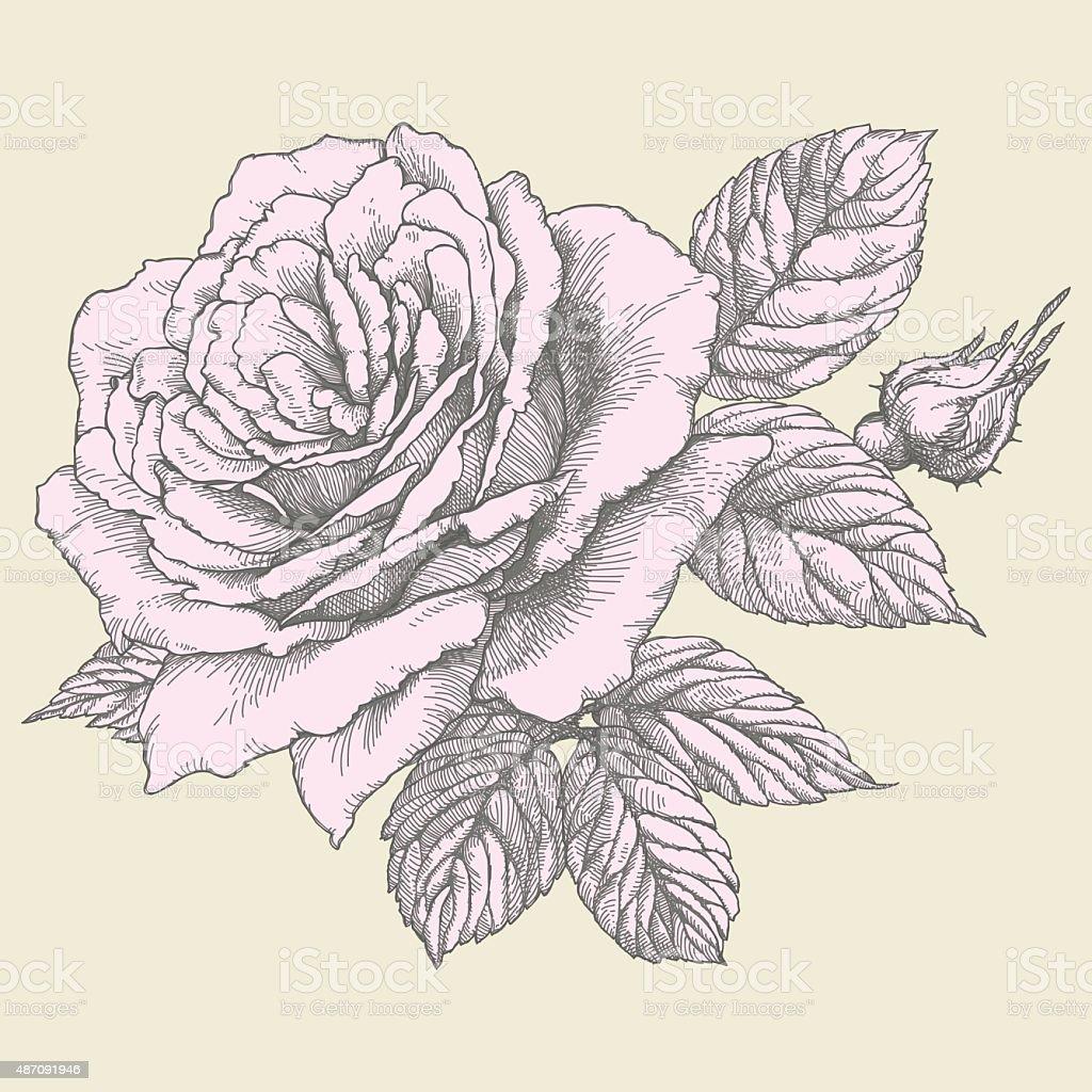 Roses. vector art illustration