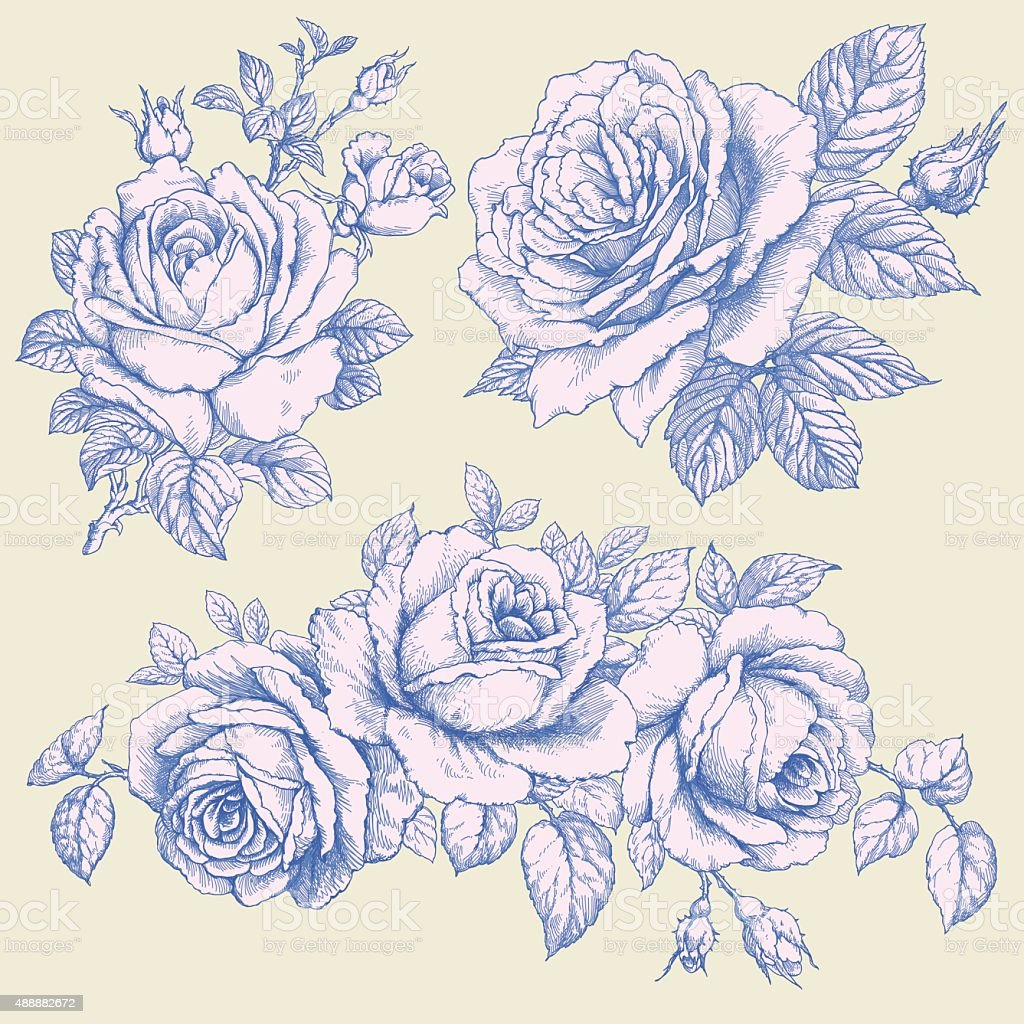 Roses vector art illustration