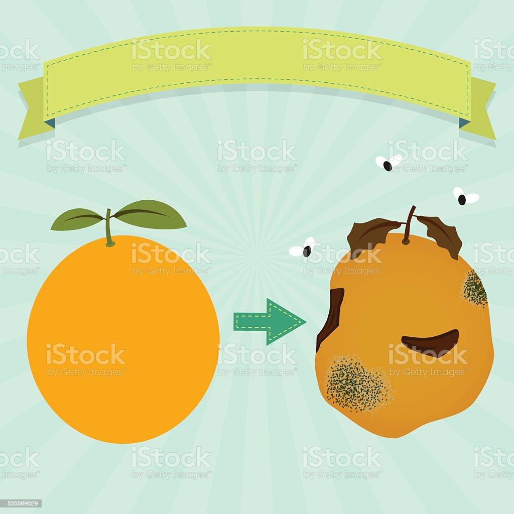 Rotten orange vector art illustration