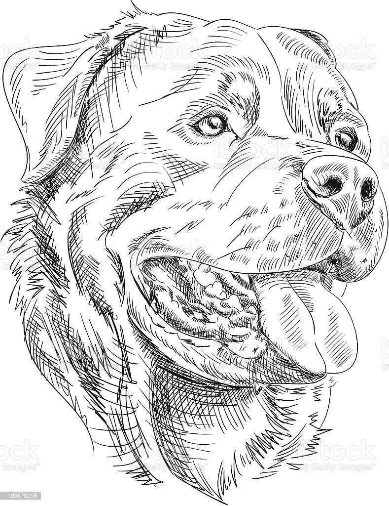 Rottweiler Dog Drawing royalty-free stock vector art
