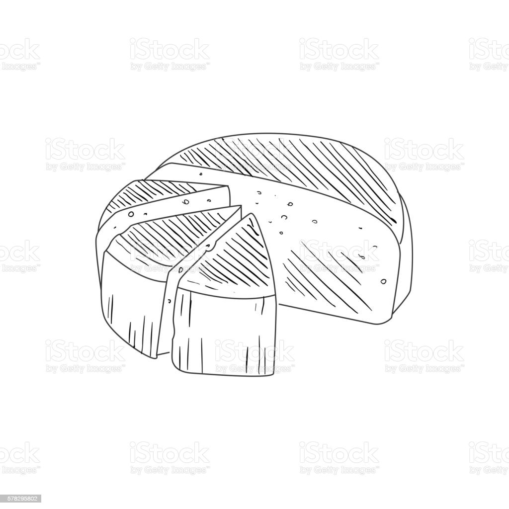 Round Cheese Cut In Segments Hand Drawn Realistic Sketch vector art illustration