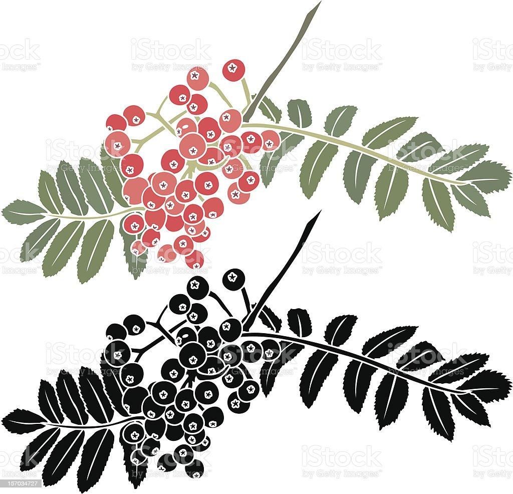 rowan berry branch stencil royalty-free stock vector art