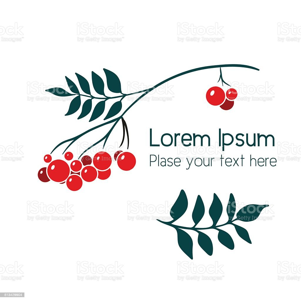 Rowan branch with berries. vector art illustration