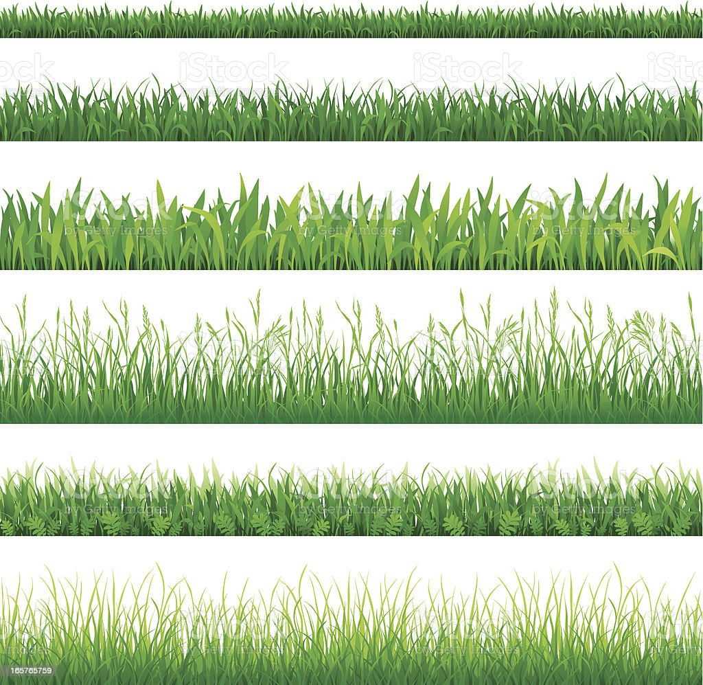 Rows of different types of green grass vector art illustration