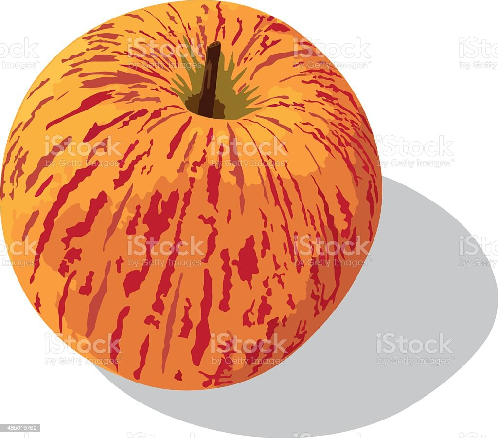 Royal gala apple vector art illustration