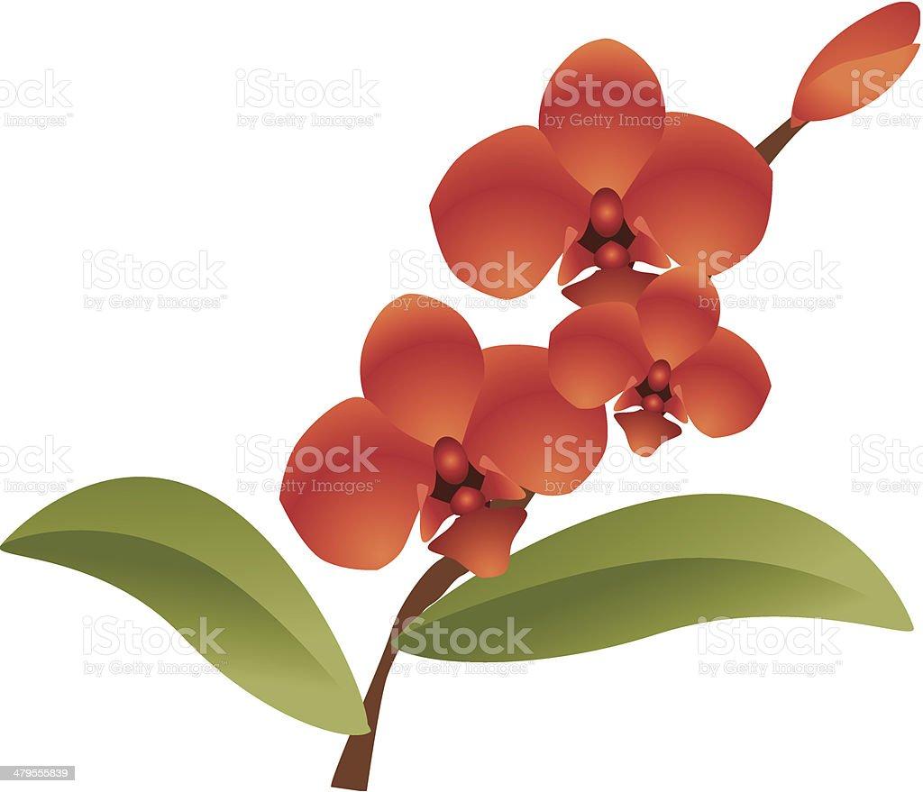royal orchid royalty-free stock vector art