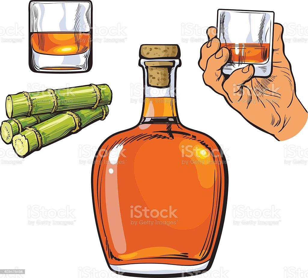 Rum bellied bottle, hand holding shot glass and sugar cane vector art illustration