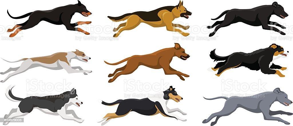 Running dogs vector illustration vector art illustration