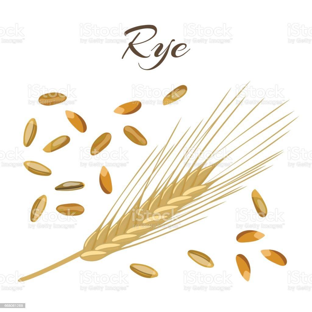 Rye ear and grains vector art illustration