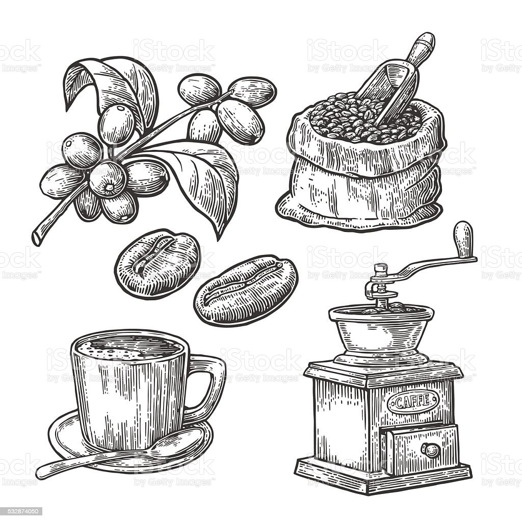 Sack with coffee beans wooden scoop beans, cup, branch berry vector art illustration