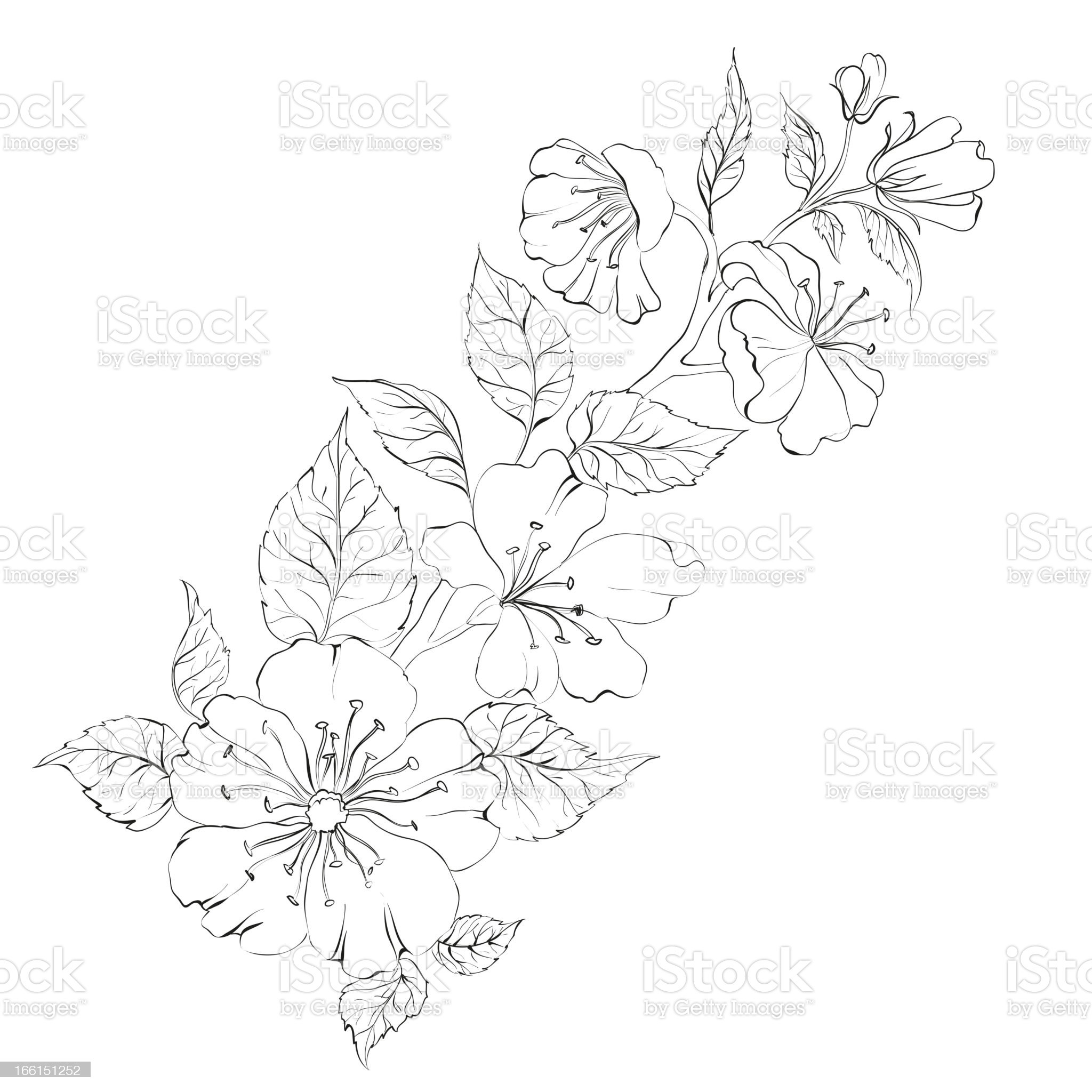 Sacura royalty-free stock vector art