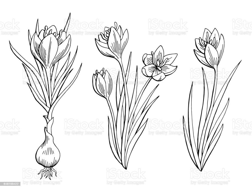 Saffron graphic flower black white isolated sketch illustration vector vector art illustration