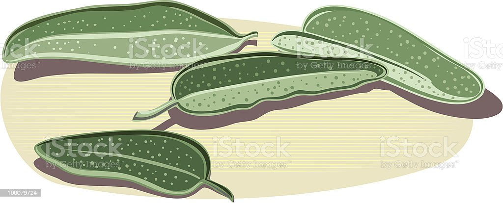 sage royalty-free stock vector art
