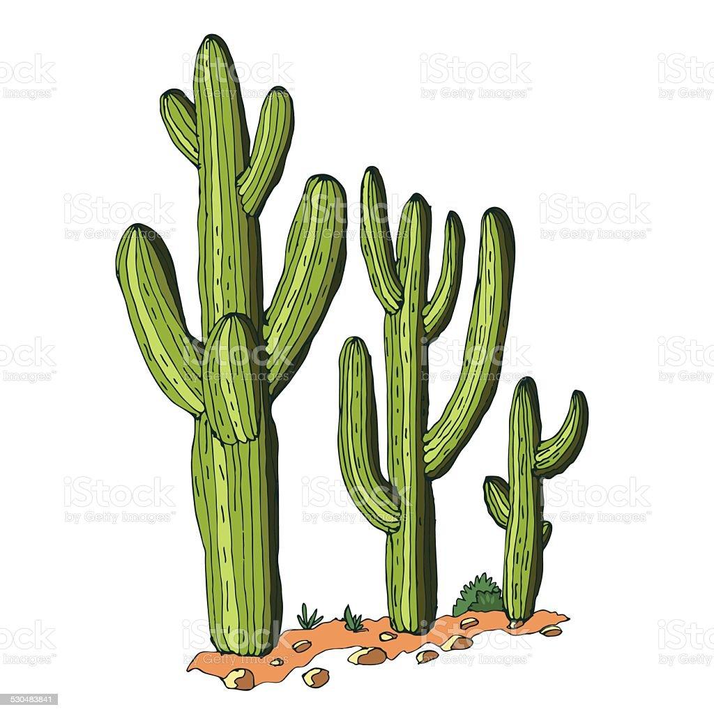 Saguaro vector art illustration