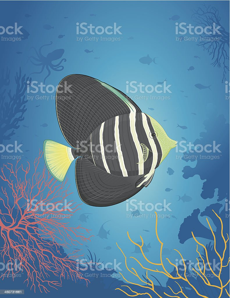 Sailfin fish / Chirurgien Voilé vector art illustration