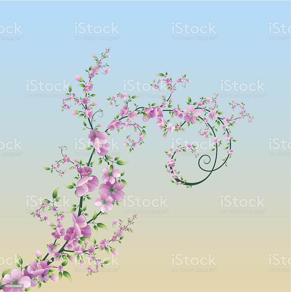 Sakura royalty-free stock vector art
