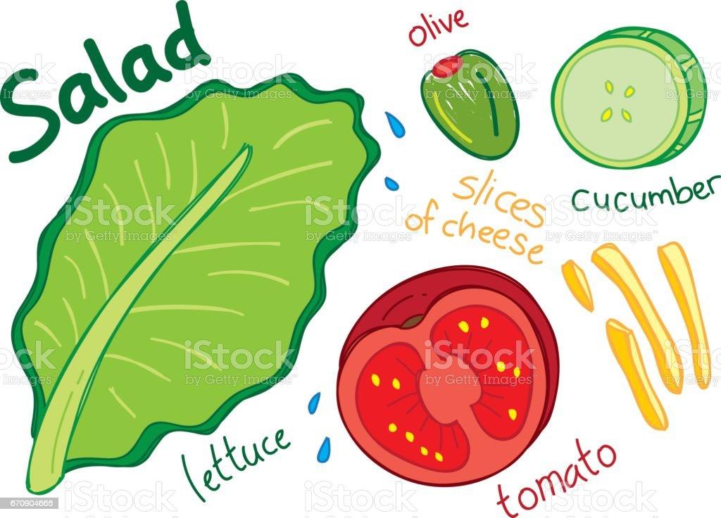 Salad doodle with tomato, cucumber, lettuce etc vector art illustration