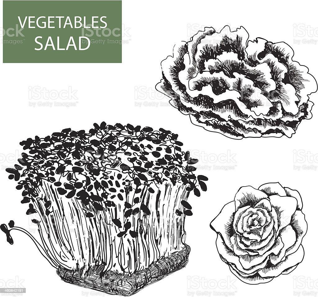 Salad - set of vector illustration royalty-free stock vector art