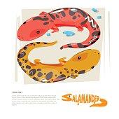 Salamander with typograohic design - vector