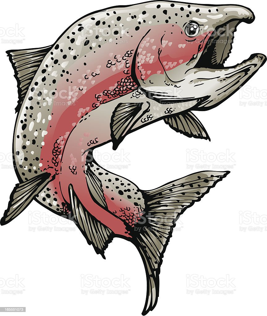 Salmon in spawning colors. vector art illustration
