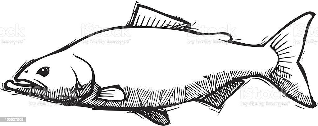 Salmon Sketch vector art illustration